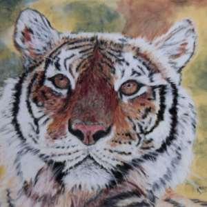 Karine D. – Tigre
