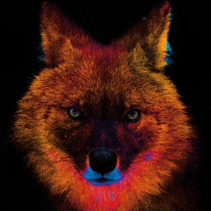 Rope – Dhole – Print A5