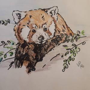 Véronique Redon – Petit panda roux