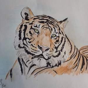 Véronique Redon – Tigre songeur
