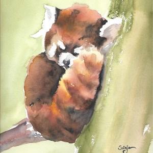 Soizic – Panda roux