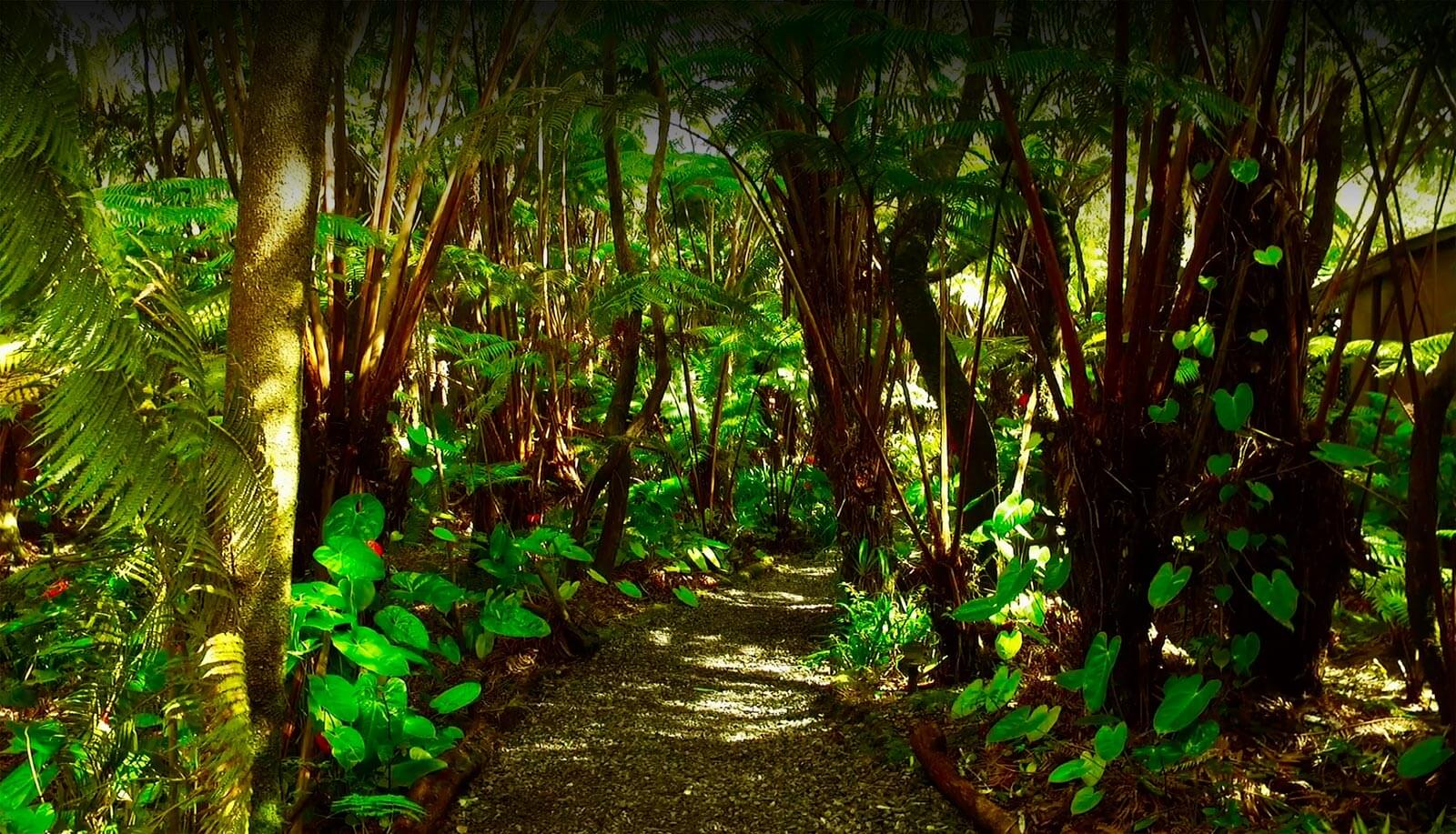 Volcano inn Rainforest slider header