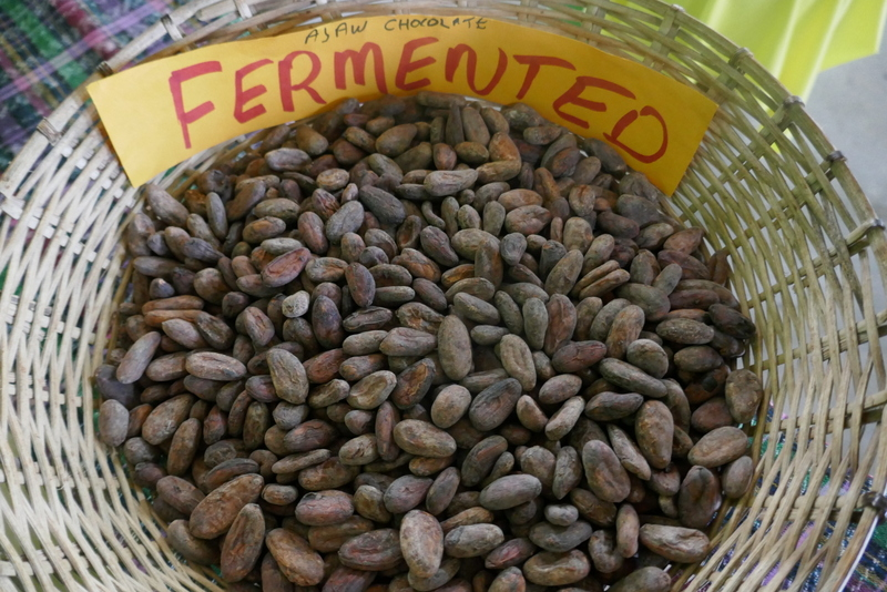 Fermented cacao beens at AJAW