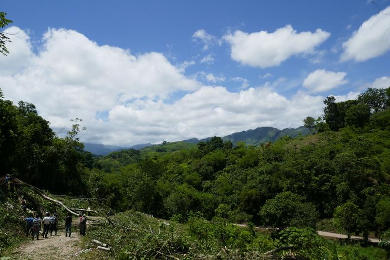 Villagers chop trees near Semuc Champey.
