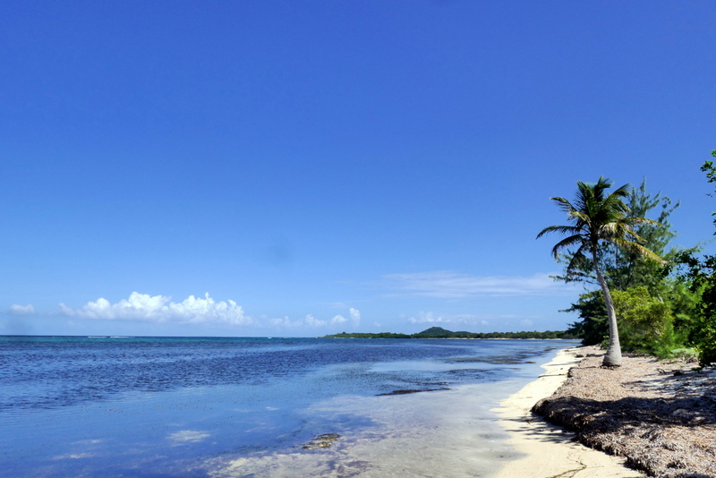 Lonely palm tree on a beach in Utila