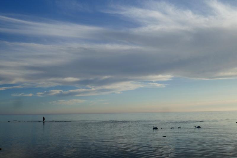 swans in the sea near Krapi, Estonia