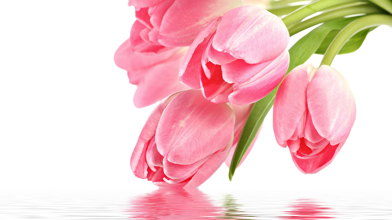 Most Heart Touching Wallpapers With Quotes Beautiful Tulips Wallpapers 1366x768 Volganga