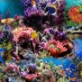 Under Sea Wallpapers 1366x768 Volganga