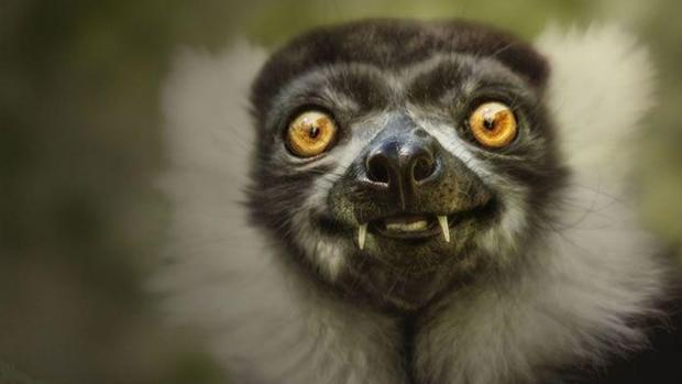 Cute N Sweet Hd Wallpapers 18 Most Hilarious And Cute Smiling Animals Volganga