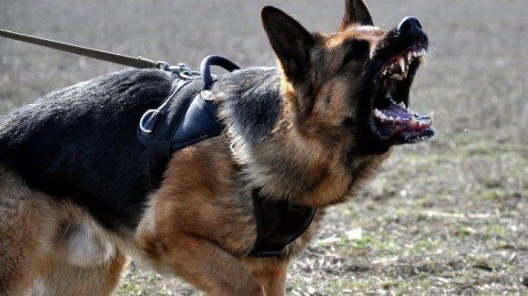 """""""Уберите собаку!"""""""