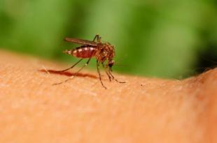Evo kako da otjerate komarce