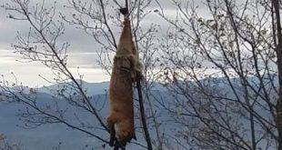 Građani reaguju, Uznemirujuća scena na putu za Gostilje: Sramotno ophođenje prema životinjama