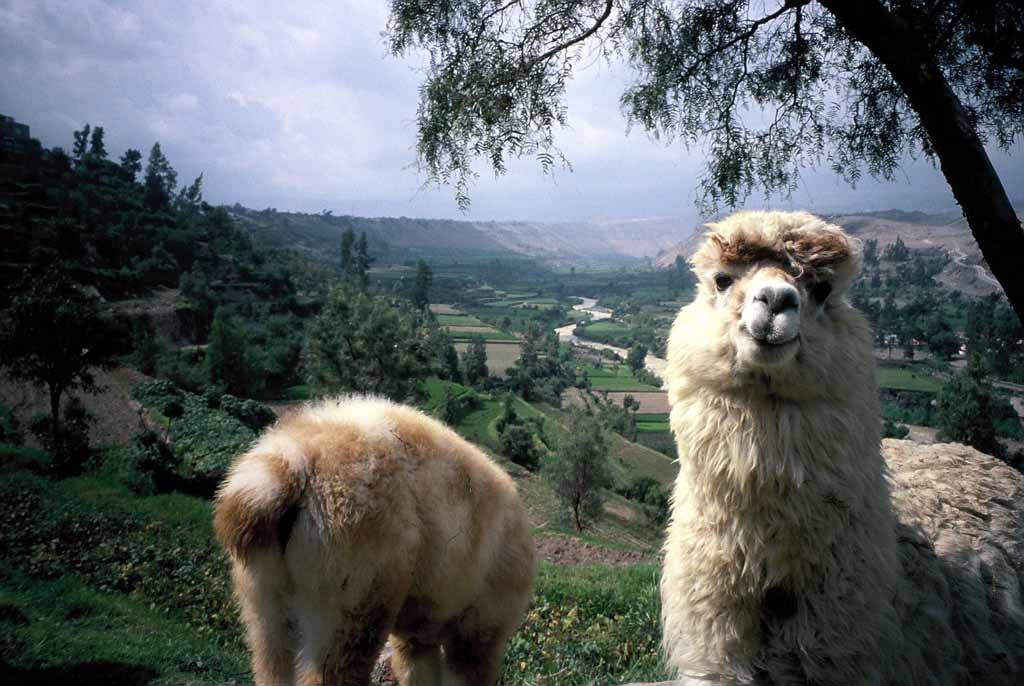 Travelogue Peru 2006  Arequipa and driving to Colca