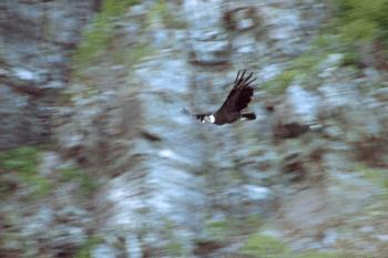 El cóndor pasa – Der Kondor fliegt vorüber