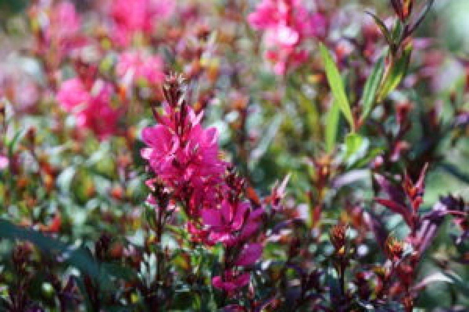 plukbloemen