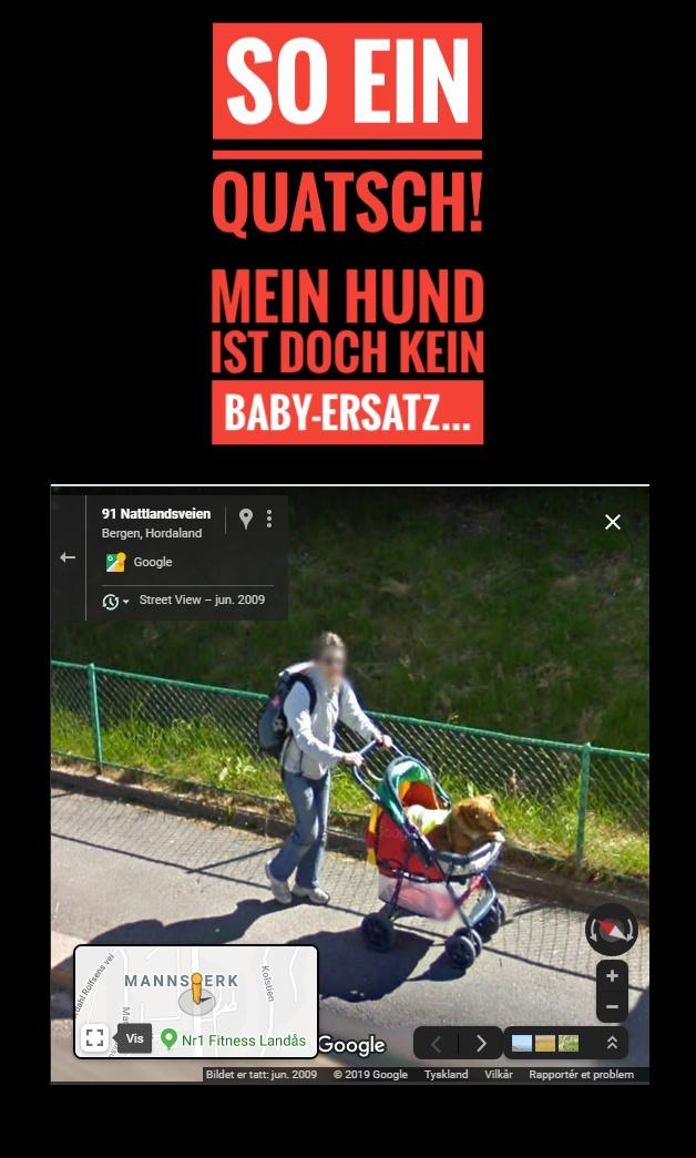 hund baby kinderwagen fail
