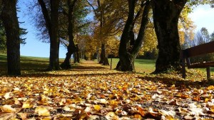 Wir laufen gerne auch im Herbst