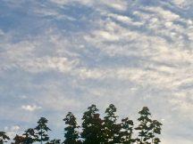 Baumwipfelwolken