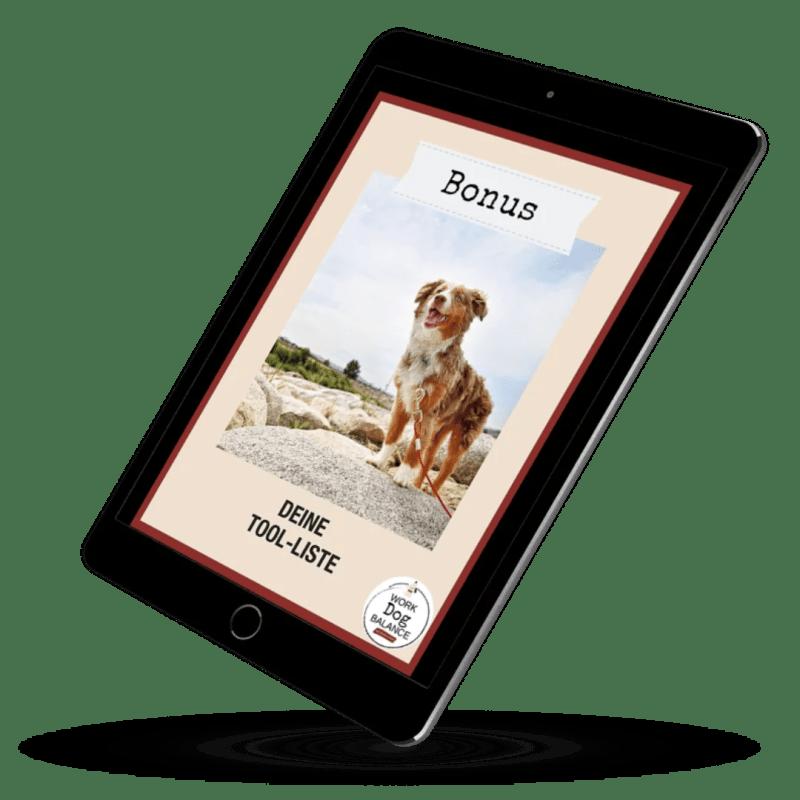 online-kurs-fuer-hunde-halter-besitzer-hund-neu-entspannter-alltag5