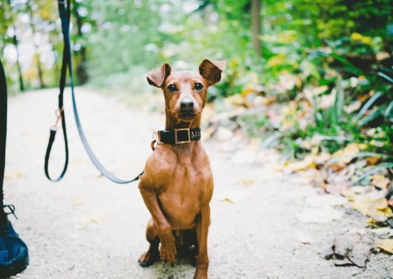 work-dog-balance-online-kurs-hund-hunde.7