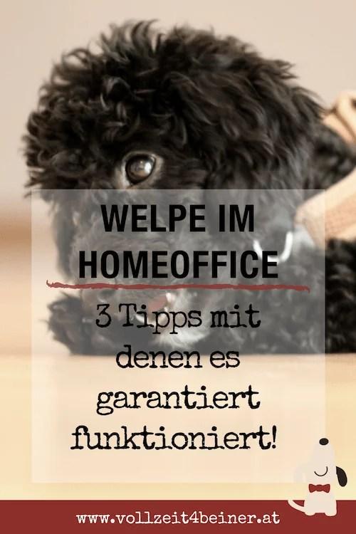 welpe-im-home-office-buero-berufstaetig-hund-tipps Kopie
