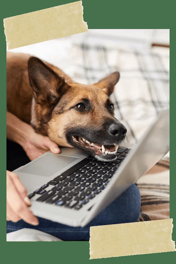 webinare-vollzeit4beiner-hundetrainer-hunde-online-training-schule