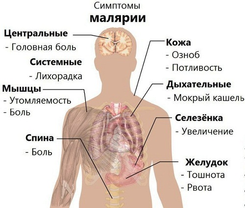 Последствия малярии у мужчин