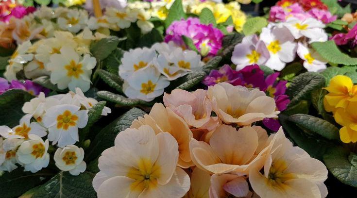 Garden Shop: Μεγάλη ποικιλία σούπερ τιμές για να φτιάξεις τον κήπο σου!