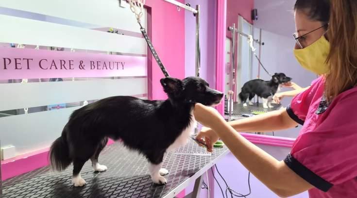 Pet Care & Beauty: Ο καλλωπισμός σε άλλο επίπεδο- Στο τέλος έχει και δωράκι!