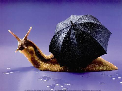 Cargol amb paraigues