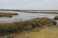 Delta del Ebre - 07 juny 2014 d1-imp