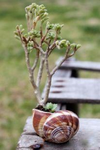 Test de Cargols amb plantes