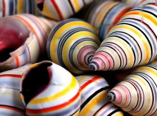 Cargols de colors