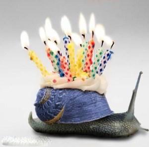Aniversari d'un cargol
