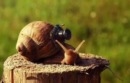 cargol-fotograf