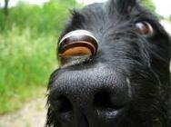 Cargol i gos 2
