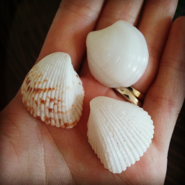 shells found on seven stars beach turks and caicos