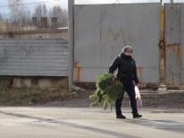 tras comprar el árbol
