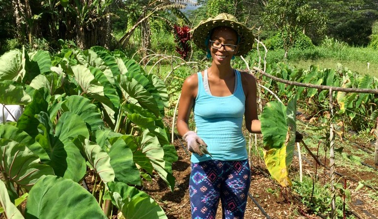 whitney learns to farm dryland kalo during her summer internship