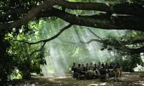 Palenque Foto Ivan D Gaona