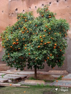 Marrakech - Tangerinas