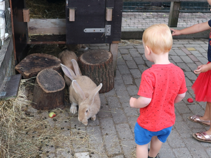 kinderboerderij deventer