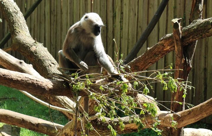 zomer apenheul