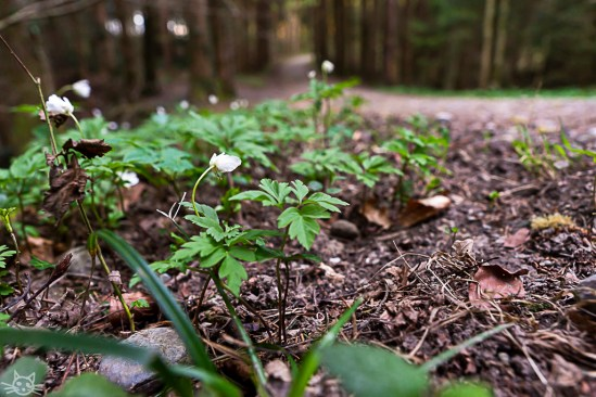 Ich gehe noch kurz alleine in den Wald