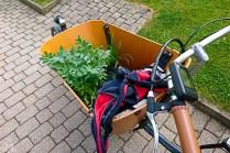 Grünzeug für den Garten/Küche