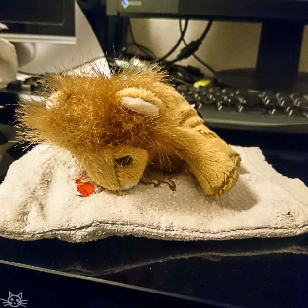 vor meinem Rechner liegt ein Löwe auf einem Kältepack. Wurde er verletzt?