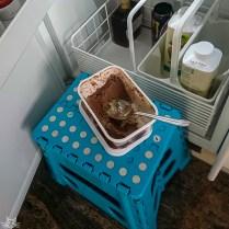 Das Kind belohnt sich selbst mit Eis. Die Portion war übrigens angemessen klein...