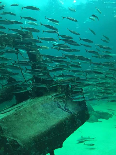 Destination Oceanariet