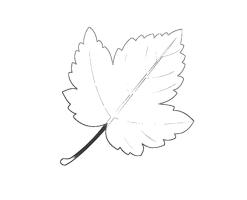 Herbstblätter Vorlage   ideal zum Ausmalen und basteln ...