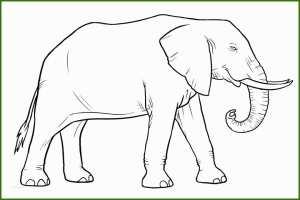 Neue Version Elefanten Malvorlagen Kostenlos Zum ...